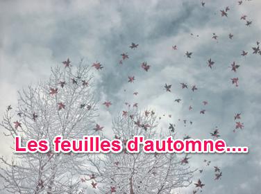 pilar-lopez-coach-sophrologue-therapie-constellation-business-75018-feuilleton-ete-2016-ecriture-ecrire-journal-intime-jecris-donc-je-suis-feuilles-arbres-automne-image1